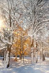 Albero dorato in mezzo alla neve nella luce del mattino