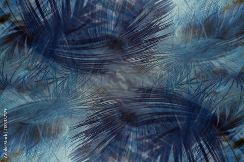 Autruche Colorful feather blue and brown texture background