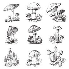 Mushroom Set Hand Drawn Engrav...