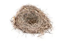 Empty Carolina Wren Bird Nest ...