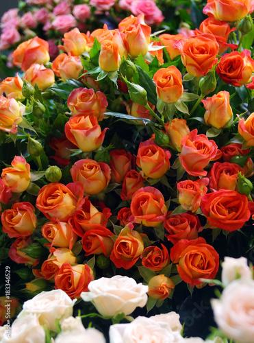 Plakat duża liczba delikatnych róż