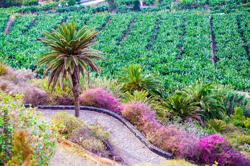Tuinposter Canarische Eilanden Traditional farm land and bananas plantation on the coast of Canary island in Los Realejos, Tenerife, Spain