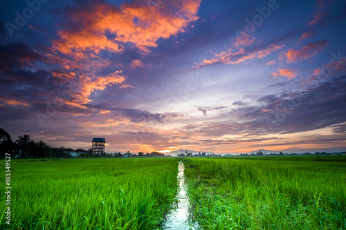Foto op Plexiglas Groene scenery of sunset at paddy field in Penang,Malaysia. Soft Focus,blur due to long exposure. Visible noise due to high ISO.