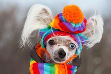 Dog Fashion Concept. Portrait ...