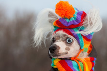 Dog Fashion Concept. Profile P...