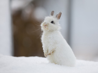 a white hare stands on the snow