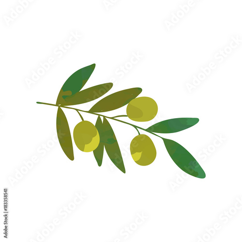Cartoon Branch Of Olive Tree With Green Leaves Traditional Symbol