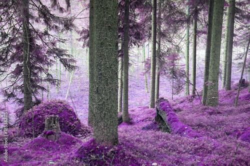 Fototapeta drzewa   fiolety-w-drzewach