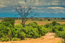 The Unique Beauty Of Dead Trees, Chobe National Park, Botswana