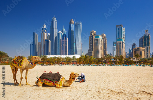 Photo  The camels on Jumeirah beach and skyscrapers in the backround in Dubai,Dubai,Uni