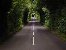 Green Tunnel In An Irish Road