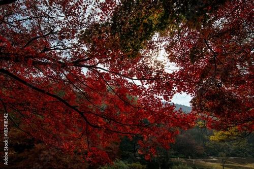 Garden Poster Brown Autumn senery