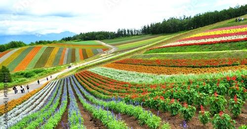 北海道の風景、美瑛 Wallpaper Mural