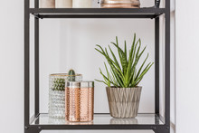 Plant And Box On Shelf