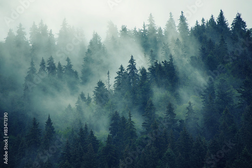 Photo sur Aluminium Bleu nuit Misty landscape with fir forest in hipster vintage retro style