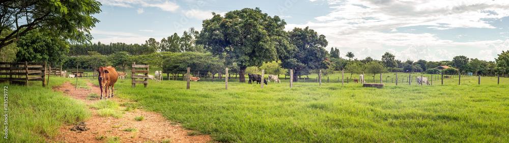 Fototapety, obrazy: fazenda