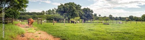 Obraz fazenda  - fototapety do salonu
