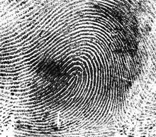 Fingerprint On White Paper, As...