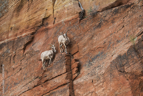 Mountain goats on rock formation