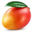 canvas print picture - Ripe mango isolated
