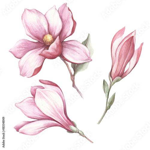 Foto op Plexiglas Magnolia Set of blooming magnolia. Hand draw watercolor illustration.