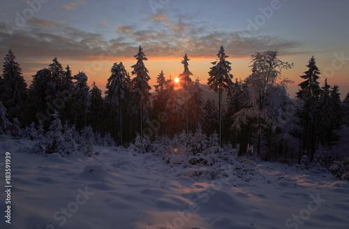 Foto op Aluminium Aubergine Sunrise through winter trees covered in snow, Feldberg, Germany