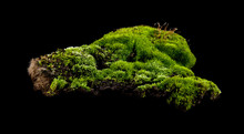 Moss On A Black Background Closeup