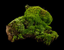 Moss On A Black Background Closeup
