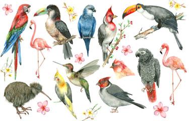 Fototapeta Zwierzęta Tropical bird set
