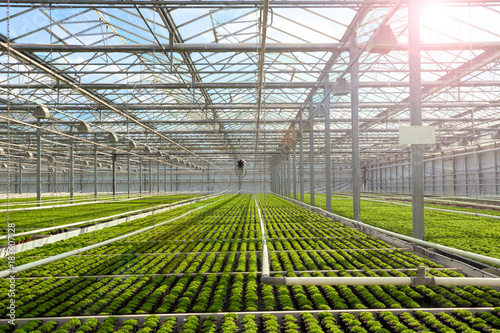 Fotomural Greenhouse with cultivation