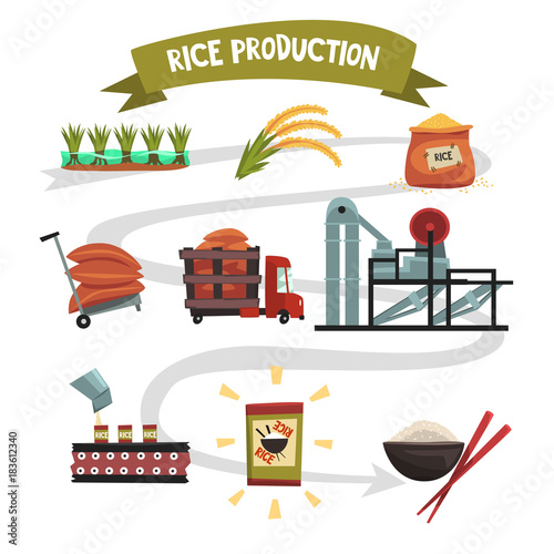 Tuinposter Drawn Street cafe Infographic template of rice production from cultivation to finished product cultivation, drying, harvesting, transportation to factory, milling, packaging, ready product.