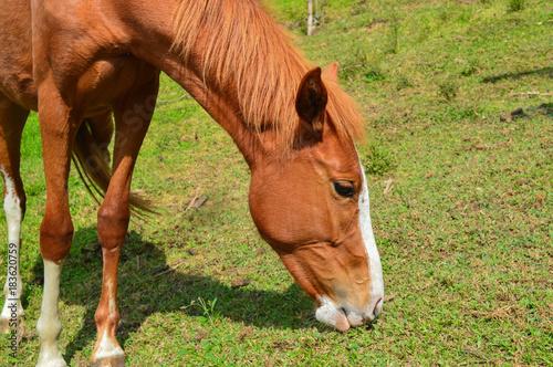 Fotografie, Obraz  HORSE (Caballo)