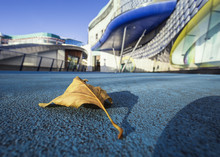 Yellow  Leaf On Blue Concrete ...