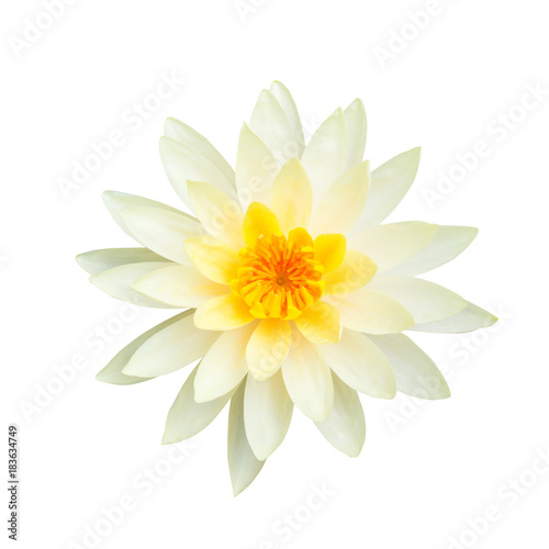 Papiers peints Fleur de lotus White lotus flower isolated on white background., This has clipping path.