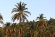 Thailand - Khao Lak - Vegetation