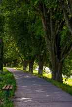 Bench In Shade Of Linden Trees. Uzh River Embankment In Summer