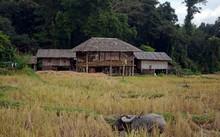 Palong Houses, Baan Tong Luang...
