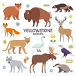 Vector illustration of Yellowstone National Park animals: moose, elk, bear, wolf, fox, bison, badger, wolverine, mountain lion, bald eagle, swan, isolated on white background.