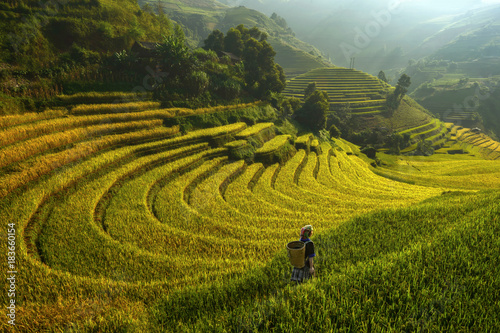 Foto auf Gartenposter Reisfelder Bright morning of rice terraces in Mu cang chai,Yenbai,Vietnam.