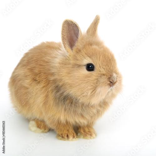 Fototapeta Cute white baby bunny rabbit obraz na płótnie