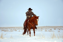 Cowboy Riding A Horse In The S...