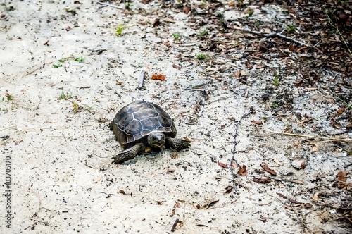 Photo  turtle walking on sand