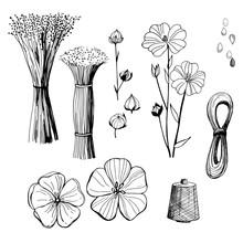 Hand Drawn Flowers. Flax  Plan...