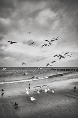 FototapetaBlack and white picture of birds on the beach.