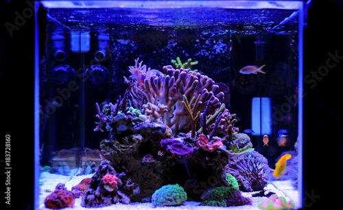 Coral reef saltwater aquarium scene