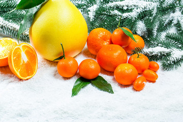 Fresh mandarins, oranges, pomelo, kumquat, kinkan with leaves on white snow. Ripe citrus fruits background. Symbol of the New Year and Christmas