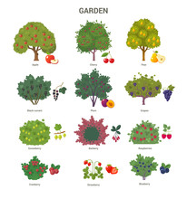 Garden Trees And Shrubs Collec...