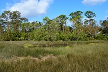 Marshland Of Florida Backdrop