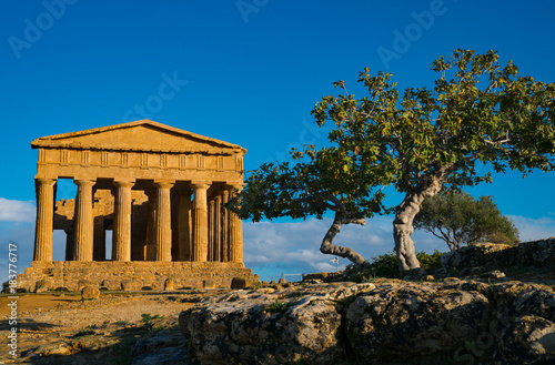 Tempio delle Concordia, Valle di Templi, Valley of Temples, Agrigento, Sicily Canvas Print