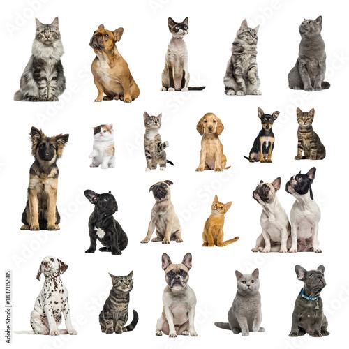 duza-kolekcja-10-psow-i-10-kotow